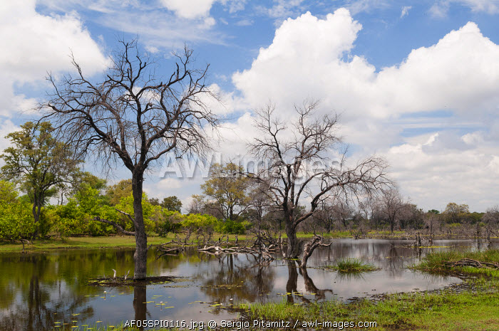 Khwai Concession Area, Okavango Delta, Botswana.
