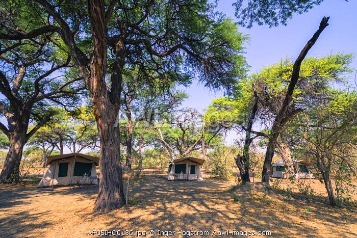 Botswana. Okavango Delta. Khwai concession. Safari campsite under tall acacia trees.