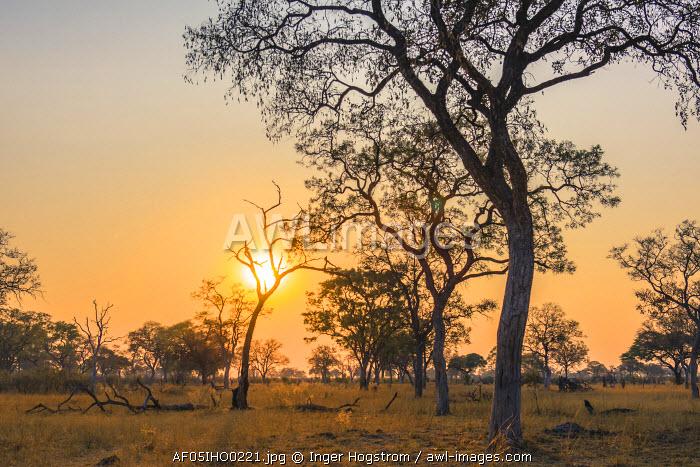 Botswana. Chobe National Park. Savuti. Sun setting beyond rain trees.