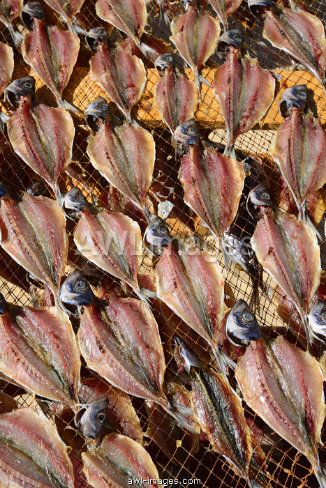 Mackerels drying at the beach. Nazare, Portugal