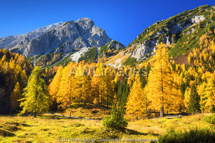 Julian Alps in Autumn, near Kranjska Gora, Slovenia, Europe