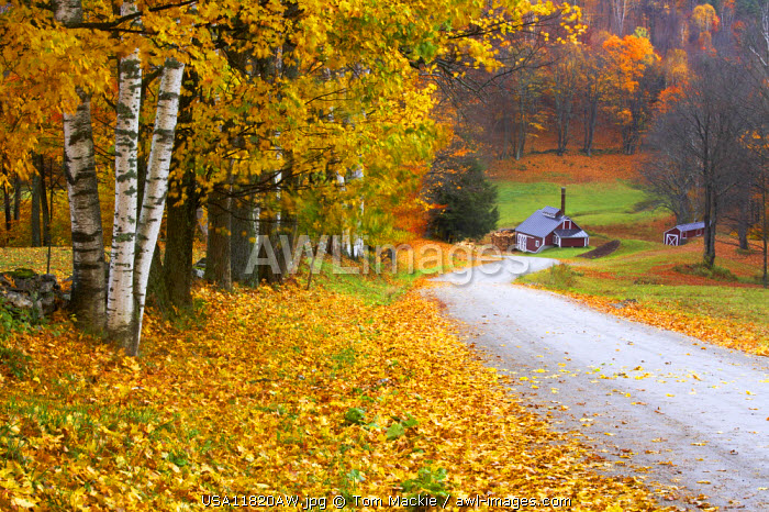 Country Lane Leading to The Sugar Mill, near Woodstock, Vermont, USA