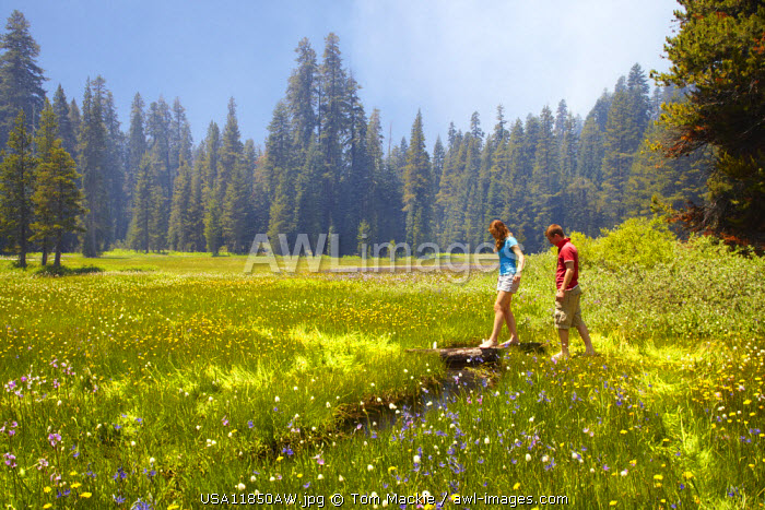 Couple in Wildflower Meadow, Yosemite National Park, California, USA