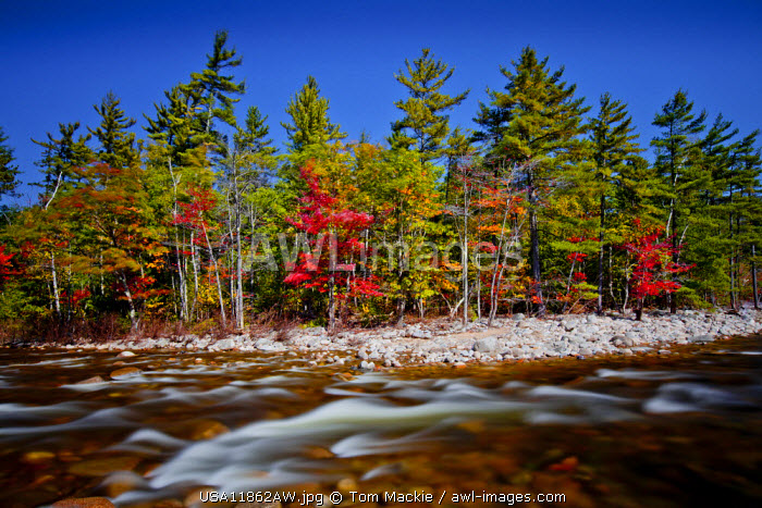 Swift River in Autumn, New Hampshire, USA