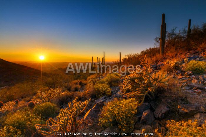 Sunset at McDowell Sonoran Preserve, Scottsdale, Arizona, USA