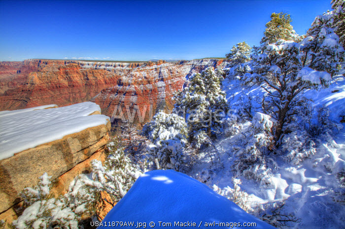 Fresh Snowfall Along South Rim, Grand Canyon National Park, Arizona, USA