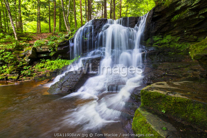 Dry Run Falls, Wyoming State Forest, Sullivan County, Pennsylvania, USA