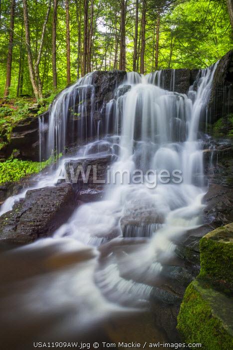 Dry Run Falls, Wyoming State Forest, Sullivan County, Pennsylvania, USA