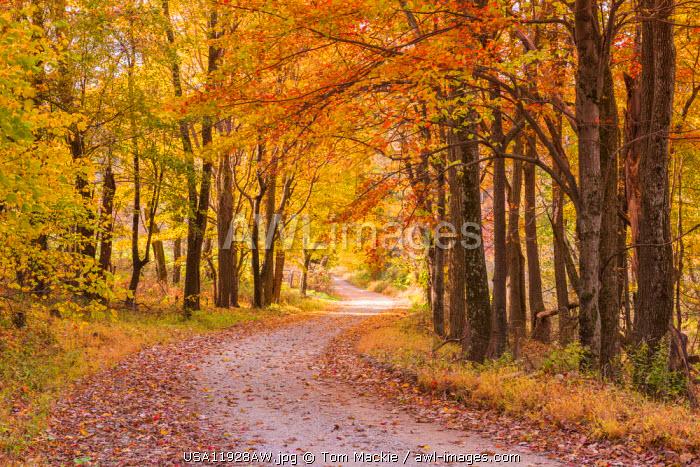 Country Lane in Autumn, Shenandoah National Park, Virginia, USA