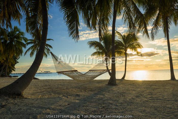 Palm Trees & Hammock,  Islamorada, Florida Keys, USA