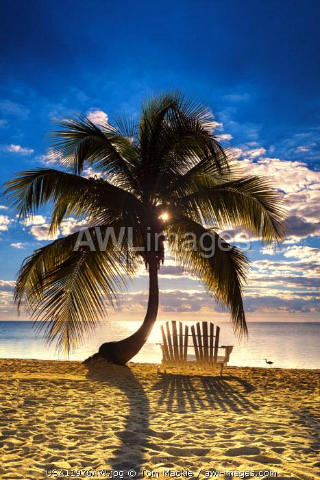 Palm Tree & Love Seat,   Islamorada, Florida Keys, USA
