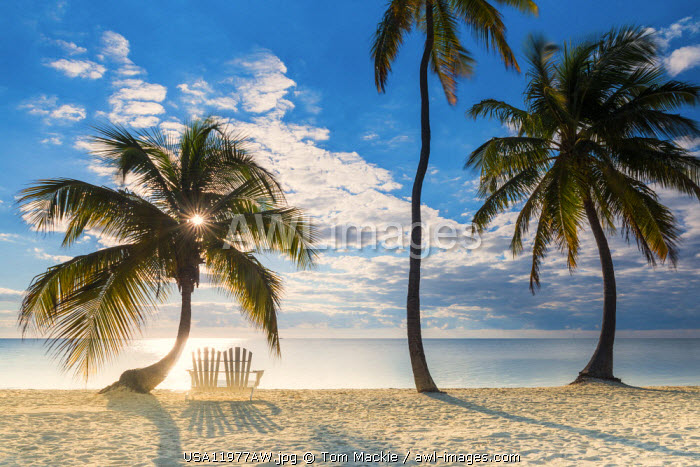 Palm Trees & Love Seat,   Islamorada, Florida Keys, USA