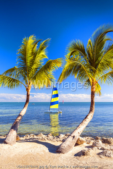 Hobie Cat & Palm Trees,    Islamorada, Florida Keys, USA