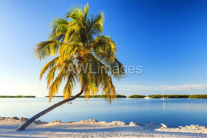 Single Palm Tree, Islamorada, Florida Keys, USA