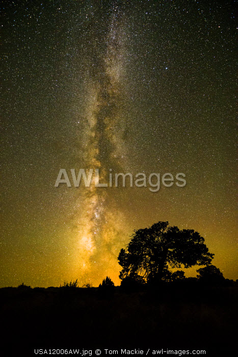 Milky Way over Juniper Tree, Monument Valley Tribal Park, Arizona, USA