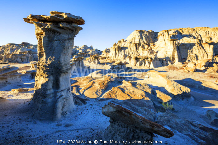 Hoodoos, Bisti Wilderness Area, New Mexico, USA