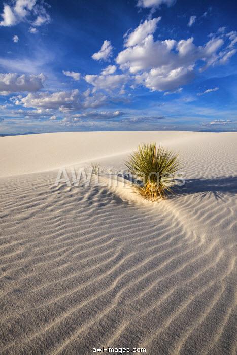 Yucca Plant, White Sands National Monument, Alamogordo, New Mexico, USA
