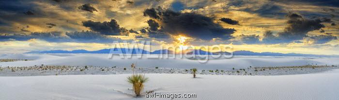 Yucca Plants, White Sands National Monument, Alamogordo, New Mexico, USA
