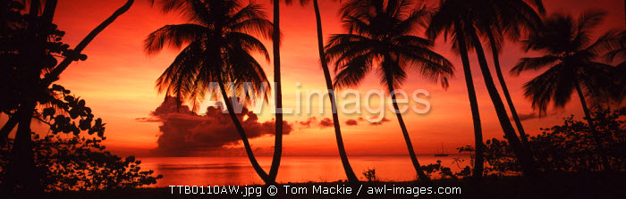 Palm Trees at Sunset, Pigeon Point, Tobago, Caribbean