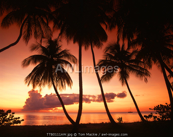 Palm Trees at Sunset, Pigeon Point, Tobago, West Indies, Caribbean