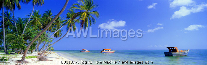 Palm Trees & Boats, Pigeon Point, Tobago, West Indies