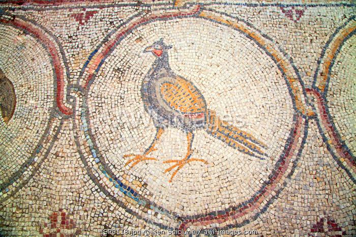 Israel, Caesarea. Mosaic of a pheasant at a Roman Villa.