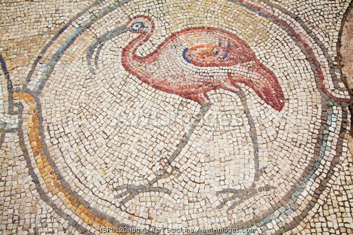 Israel, Caesarea. Mosaic of a Flamingo at a Roman Villa.
