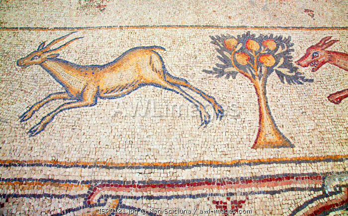 Israel, Caesarea. Mosaic of a deer being hunted by a wolf at a Roman Villa.