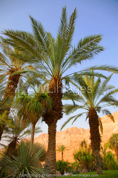 Israel, Ein Gedi. The Ein Gedi Kubbutz through the famed botanical garden with the desert in the background.