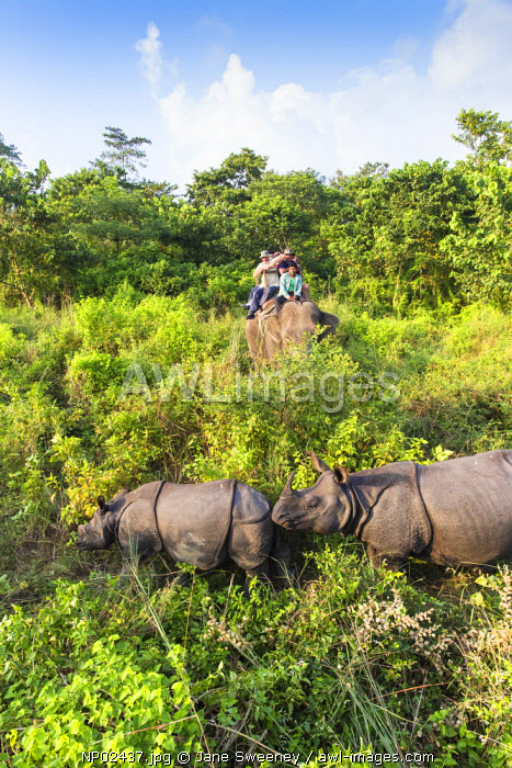 Nepal, Pokara, Chitwan National Park, Tourists on elephant safari viewing Rinos
