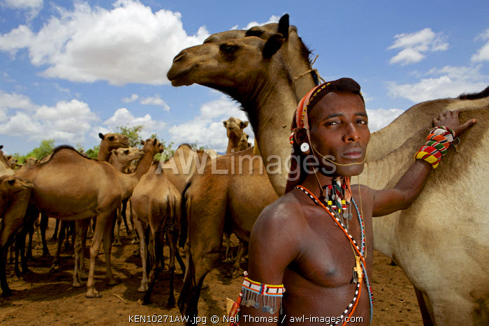 Samburu warrior with his camels, Kenya, Africa