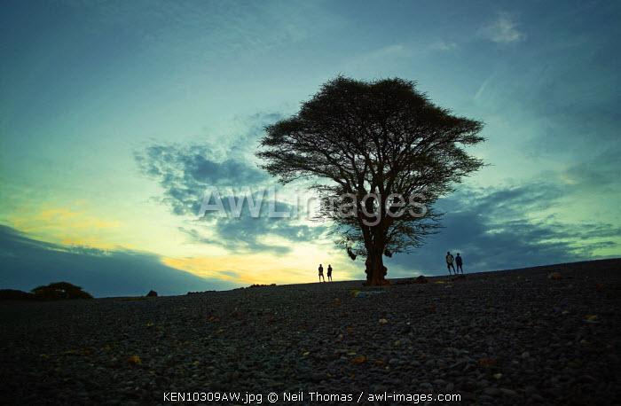 Boys gather under a tree in Turkana, Kenya, Africa