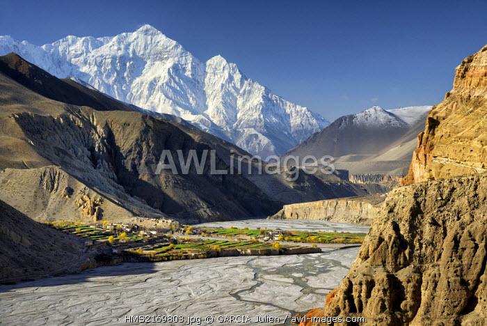 Nepal, Gandaki zone, Upper Mustang (near the border with Tibet), village of Chuksang (2900m) surrounded by fields in the valley of the Kali Gandaki river, Nilgiri peak (7061m)