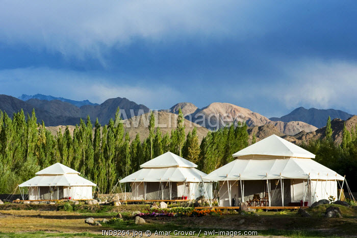 India, Jammu & Kashmir, Ladakh, Thiksey. Spacious luxury tents at the Ultimate Travelling Camp offer unrivalled comfort in the Indus Valley.