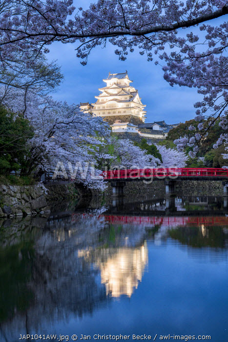 Awl images himeji castle during cherry blossom season hyogo himeji castle during cherry blossom season hyogo prefecture japan publicscrutiny Choice Image