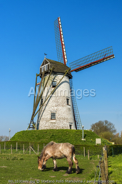 Windmill and Belgian horse, Damme, West Flanders, Belgium
