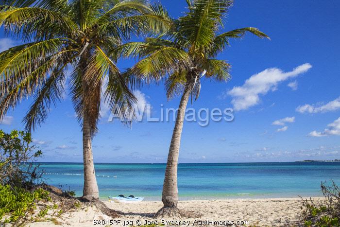 Caribbean, Bahamas, Providence Island, Nassau, Palm trees on Sandyport Beach