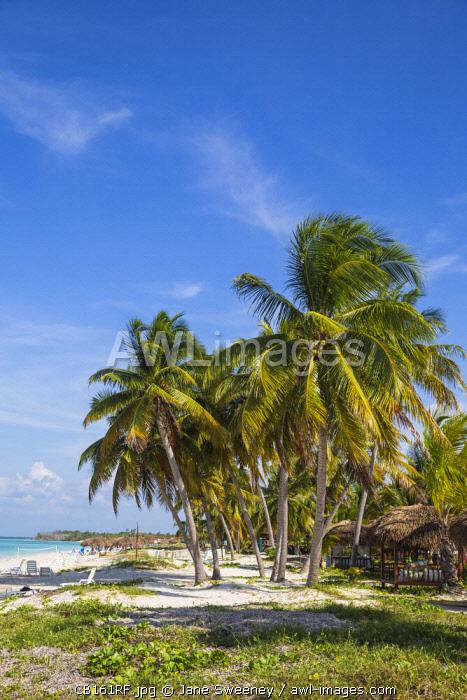 Cuba, Pinar del Río Province, Cayo Levisa, Palm trees on white sand beach