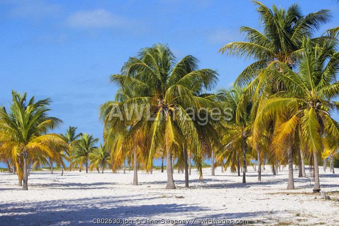 Cuba, Isla de la Juventud, Cayo Largo Del Sur, Playa Sirena
