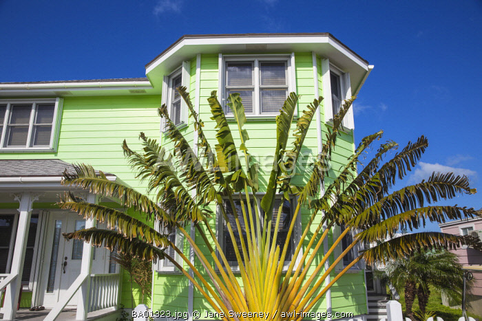 Bahamas, Abaco Islands, Green Turtle Cay, New Plymouth, Palm in garden of house