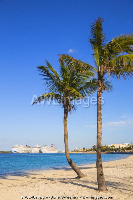 Caribbean, Bahamas, Providence Island, Nassau, Palm trees on white sand beach, with cruise ship in distance