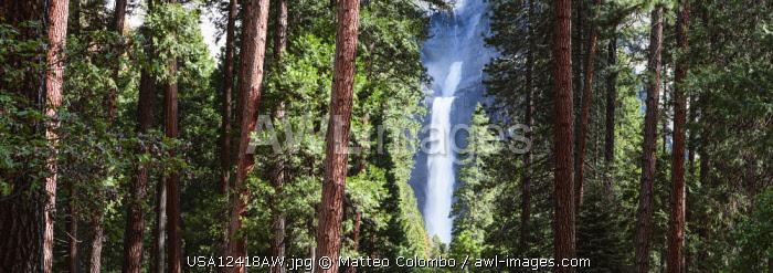 Lower Yosemite fall,  Yosemite National Park, California, USA