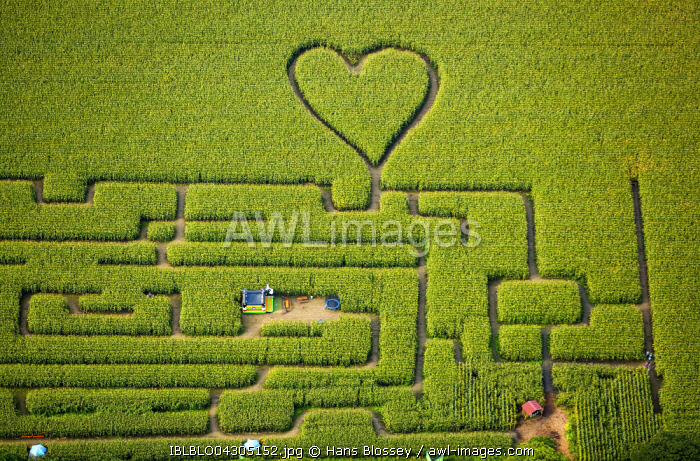 Labyrinth with a heart in the cornfield, corn maze, green heart, heart shape, heart shaped, Herten, Ruhr district, North Rhine-Westphalia, Germany, Europe
