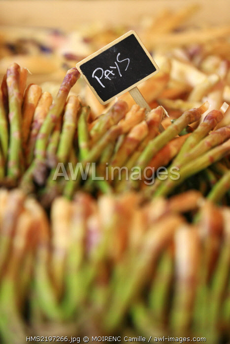 France, Vaucluse, Bedoin, Monday Market, Vegetable Olivier Ceyte producer