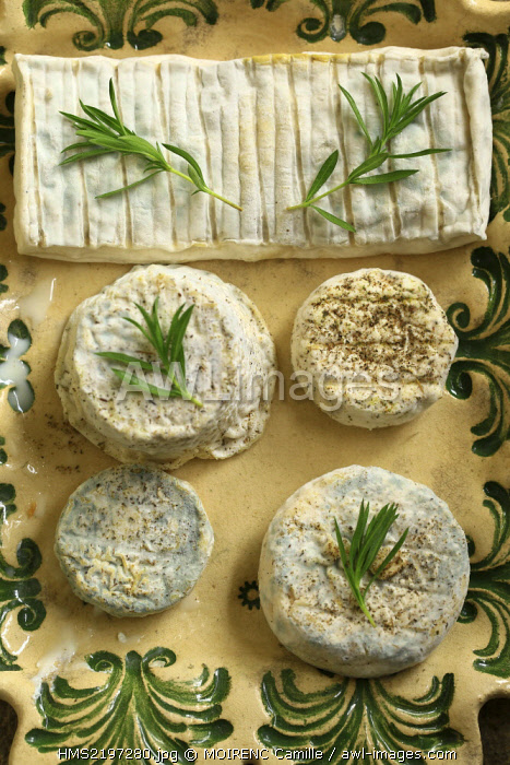 France, Vaucluse, Le Beaucet, goat cheese producer