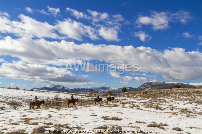 France, Alpes Maritimes, Regional Natural reserve of Pre-Alps of Azur, pony trekkings on the tray of Caussols