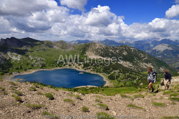 France, Alpes de Haute Provence, Uvernet Fours, Mercantour National Park, Ubaye valley, lake tour hiking trail of the Cayolle pass, Allos lake and the Verdon valley in the background