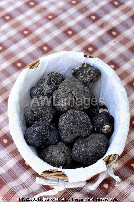 France, Vaucluse, Carpentras, black truffles on the market