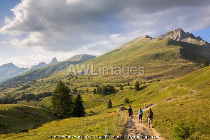 France, Alpes de Haute Provence, national park of Mercantour, Haute Hubaye, walkers in the valley of Fourane