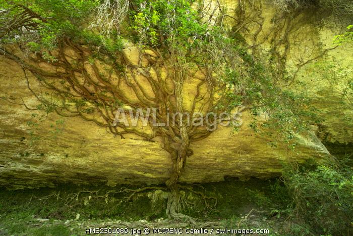 France, Vaucluse, regional park of Luberon, Vallon de l'Aiguebrun between Buoux and Sivergues